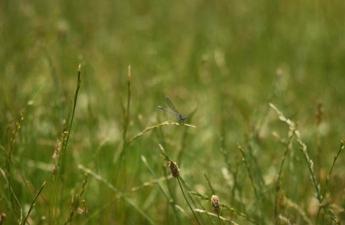 Sådan holder du græsplænen flot